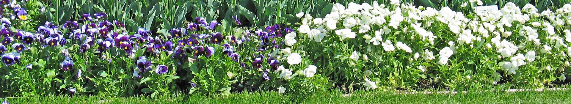 about edinburgh gardeners