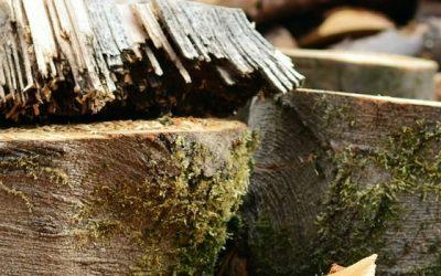 Cost Of Tree Felling